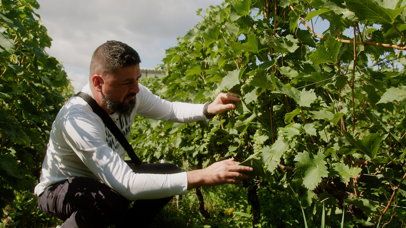 Sustainable winegrowing? It is possible! – realized study visit to the Czech Republic for 12 winegrowers